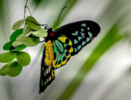 Boundaries and the Butterfly: I Do This Because I Love You